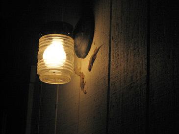 Geckosblog